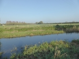 The River Thames just below Cricklade.